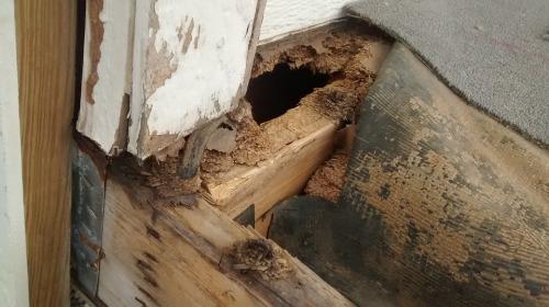 frebetoa-property-maintenance